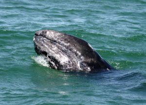 2018 SPRING WHALE WATCH