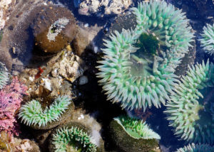tide pool clinic