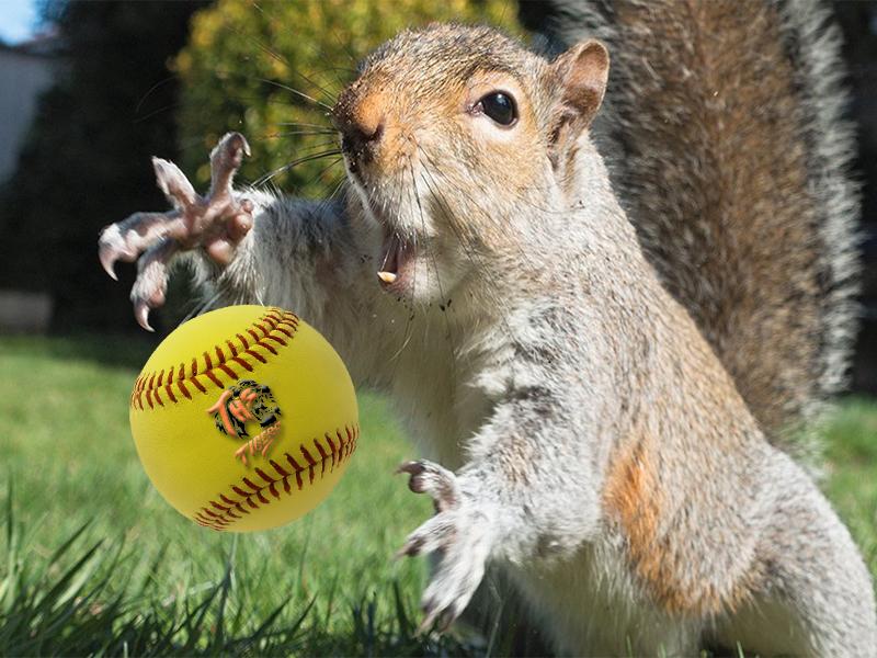 Lady Tiger Taft Softball