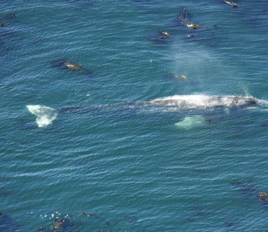 Whale Watching Week Returns Dec 27 31