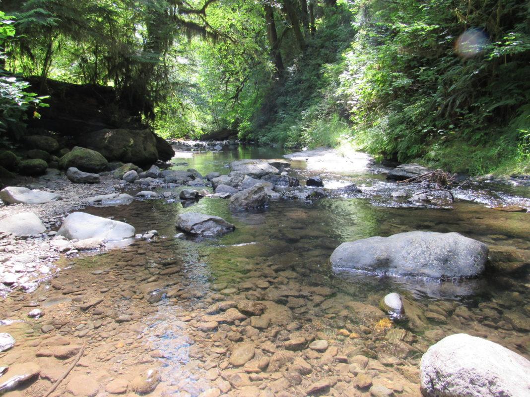 Drift Creek Falls Hidden Area