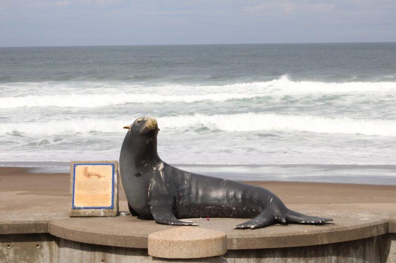 Joe the Sea Lion Lincoln City