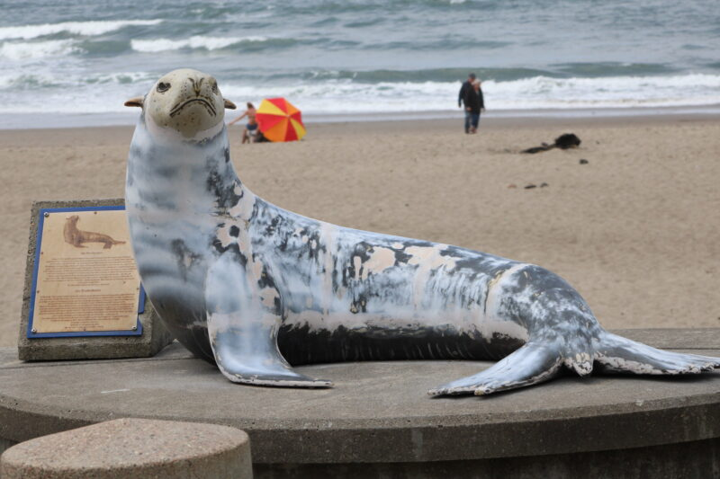 Joe the Sea Lion